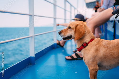 Foto Dog traveling on the ferry
