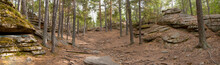 Panorama Of The Autumn Pine Forest. Path.