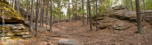 Canvas Print Panorama of the autumn pine forest. Path.