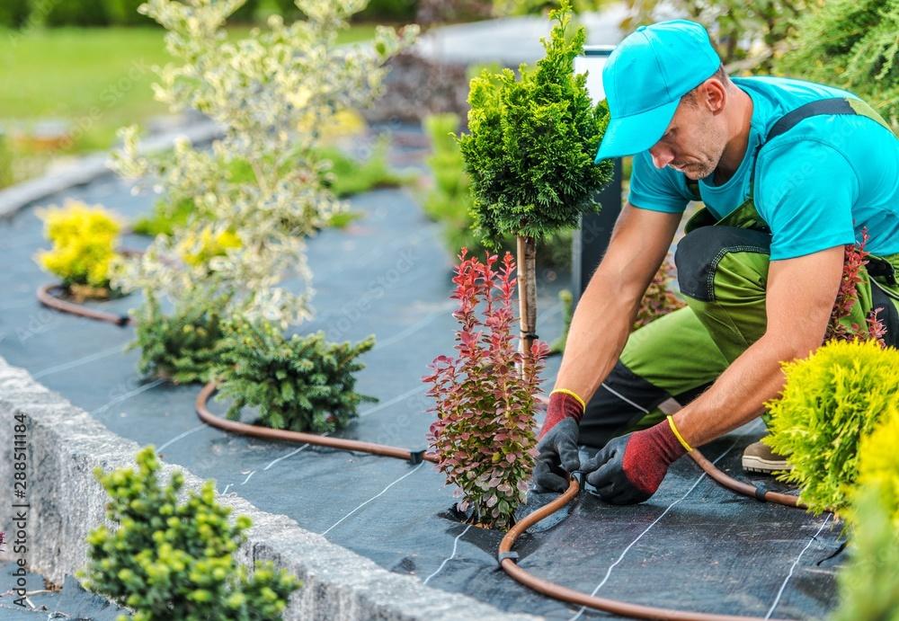 Fototapety, obrazy: Plants Irrigation System