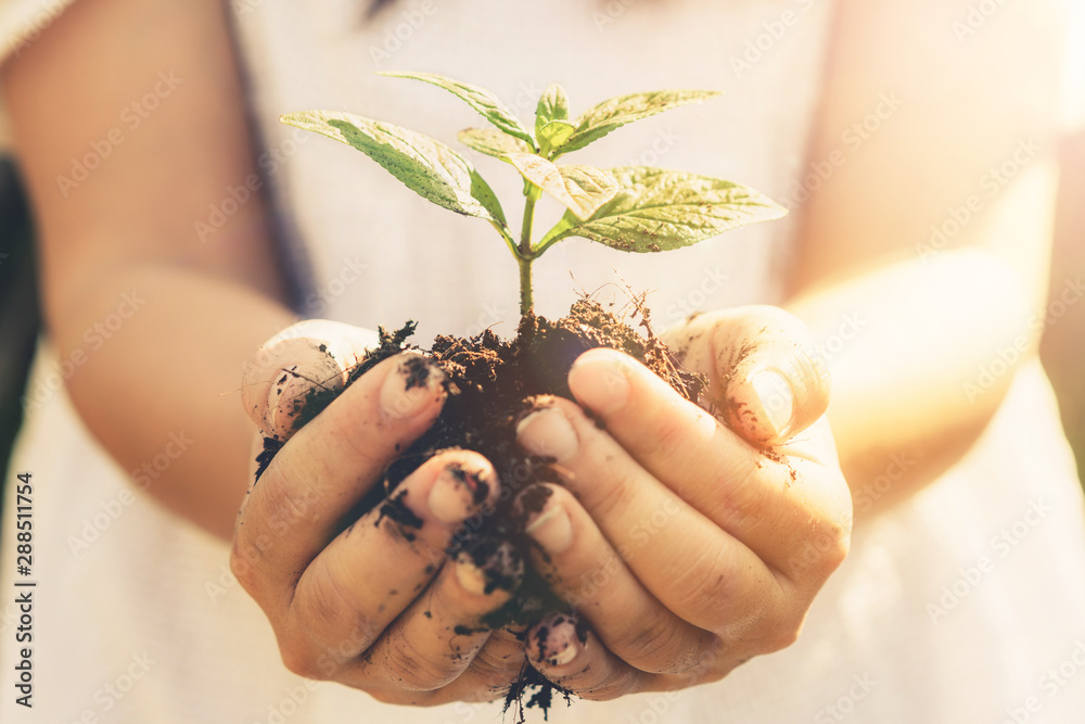Fototapeta Young plant tree sprout in woman hand. Concept of farming and environment protecting.