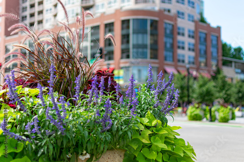 Fotografía Colorful Flowers and Plants in Downtown Evanston Illinois