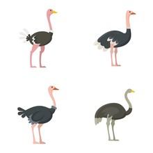 Ostrich Icons Set. Flat Set Of...