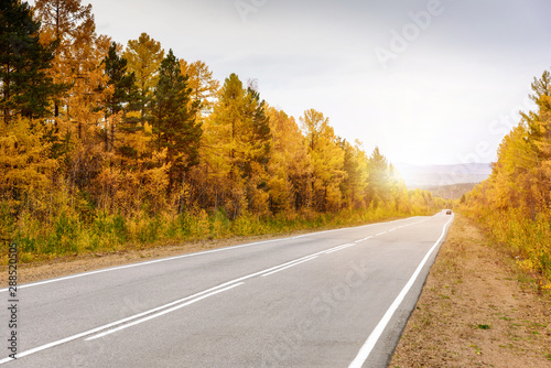 Wall Murals Autumn A curving autumn road with colorful forest and mountain in the far distance