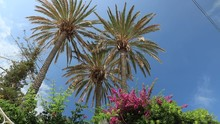 Palm And Bougainvillea Plants ...