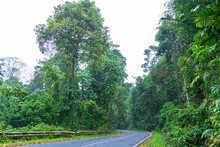 Curve Road In Wild Forest Of Khao Yai National Park Is The Largest Rainforest In Thailand. There Are Many Waterfalls. .There Are Various Wildlife And Plant Species.