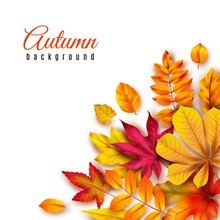 Autumn Leaves Background. Autumnal Border With Isolated Yellow Maple, Oak And Rowan Foliage. Fall Theme For Vector Template Of 3d Banner