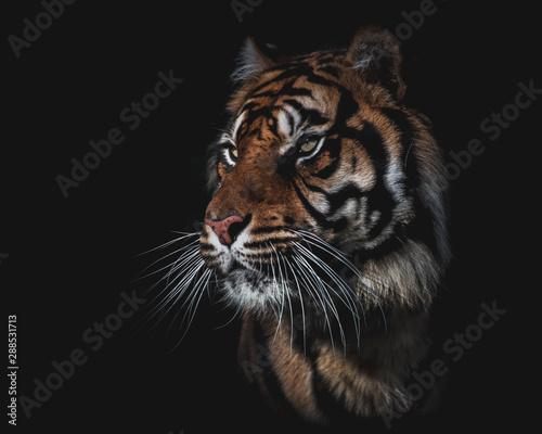 Recess Fitting Leopard Le tigre