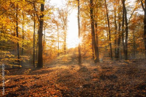 Fotografie, Obraz  Herbstwald Landschaft