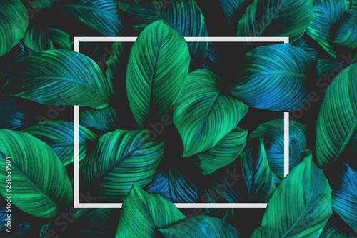 Fototapete - tropical leaves with white frame, abstract green leaves, natural green background