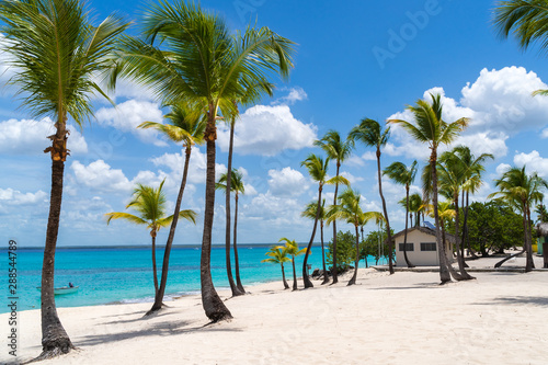 Palm Trees at Catalina Island in Dominican Republic