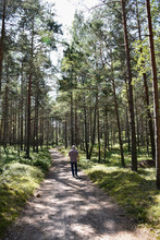 Man Walking In A Bright Pine T...