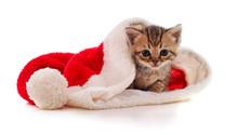 Kitten In The Hat Santa.