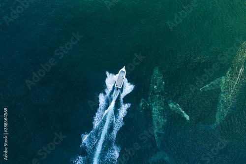 Spoed Fotobehang Schipbreuk whale