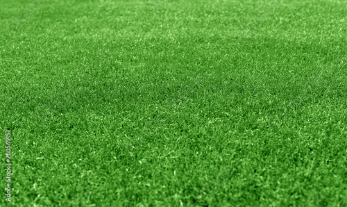 Poster Golf Green grass lawn as a background.