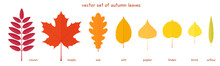 Vector Set Of Autumn Leaves. F...