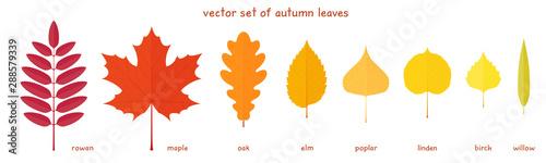 Fotografie, Obraz Vector set of autumn leaves