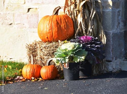 Fényképezés Fall Display