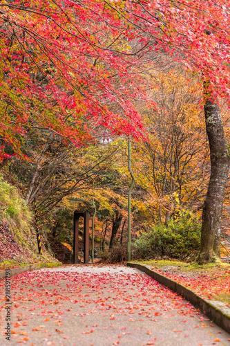 Tuinposter Baksteen 真っ赤に燃える紅葉に感動してみないかい?