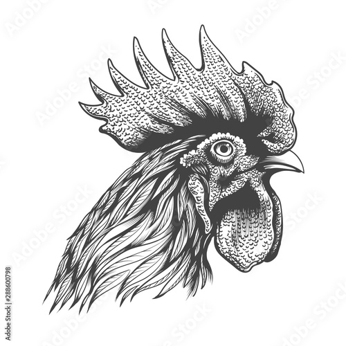 Valokuva Rooster head engraving