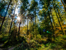 Automne Dans La Forêt Vosgienne