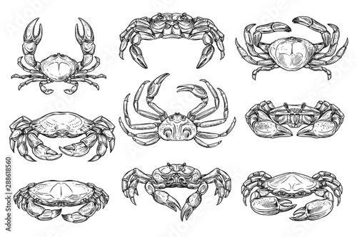 Crustacean marine crab animal sketches Wallpaper Mural
