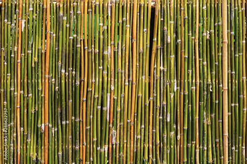 Tela  Bamboos wall texture for background.