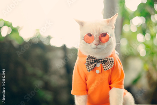 Poster Kat Portrait of Hipster White Cat wearing sunglasses and shirt,animal fashion concept.