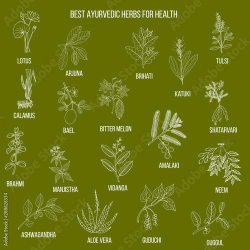 Photo Ayurvedic herbs, natural botanical set