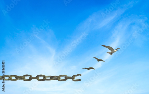 International human rights day concept: Silhouette birds flying and broken chain Wallpaper Mural