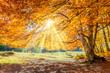 Leinwandbild Motiv Autumn landscape - big forest golden tree with sunlight on sunny meadow