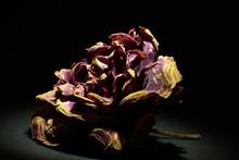 Withered Rose On A Black Backg...