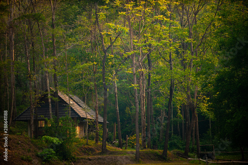 Foto house in the forest