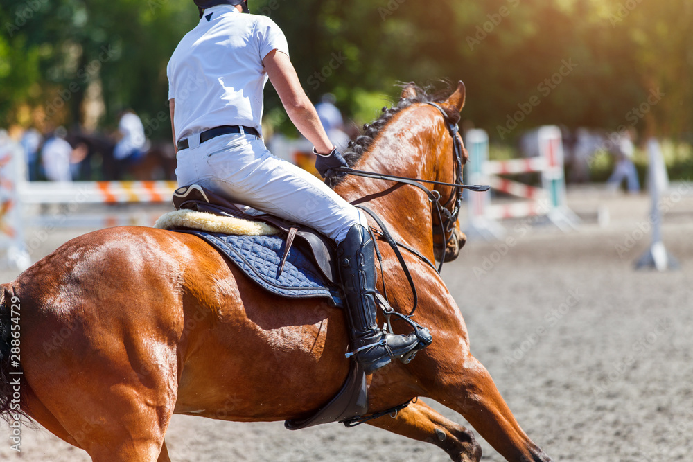 Fototapety, obrazy: Young male horse rider on show jumping competition