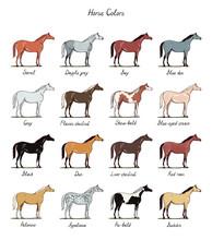 Set Of Horse Color Chart Breeds.  Equine Coat Colors With Text. Equestrian Scheme. Black, Bay, Sorrel, Chestnut, Dun, Dapple Grey, Appaloosa, Pie-bald Types Of Horses. Hand Drawn Vector Flat Cartoon