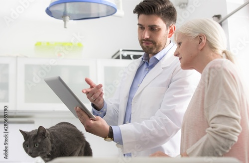 fototapeta na ścianę Confident doctor explaining medical results of russian blue cat to owner at clinic