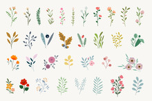 Set Of Floral Elements For Gra...