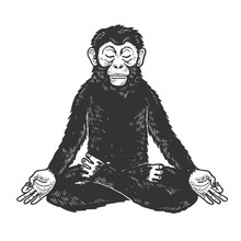 Chimpanzee Monkey Meditating In Lotus Position Sketch Engraving Vector Illustration. Tee Shirt Apparel Print Design. Scratch Board Style Imitation. Black And White Hand Drawn Image.