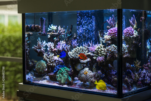 Marine fish tank in the house Canvas-taulu