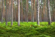 Dark Forest Scene. Fern Leaves...
