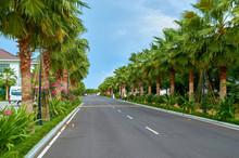 Many Palm Trees Along The Road