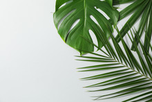 Different Palm Leaves On Grey Background, Copy Space