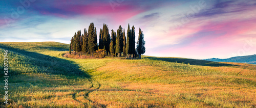 Colorful spring sunrise with small cypress forest among the field of wheat. Berautiful morning panorama of Tuscany, Italy, Europe. Beauty of nature concept background. - 288733946