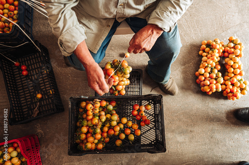 Stampa su Tela PUGLIA / ITALY -  AUGUST 2019: The old tradition of hanging cherry tomatoes on t