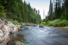Small Mountain Creek In The Fo...
