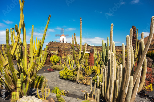 Spoed Foto op Canvas Cactus Tropical cactus garden in Guatiza village, Lanzarote, Canary Islands, Spain