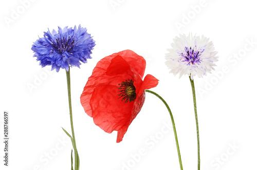Canvas Prints Poppy Poppy and cornflowers