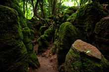 The Moss Covered Rocks Of Puzzlewood, An Ancient Woodland Near Coleford In The Royal Forest Of Dean, Gloucestershire, UK