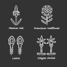 Wild Flowers Chalk Icons Set. Mexican Hat, Franciscan Wallflower, Liatris, Calypso Orchid. California Flora With Name Inscription. Blooming Wildflowers, Weed. Isolated Vector Chalkboard Illustrations