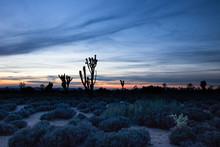 Mojave Desert At Sunset